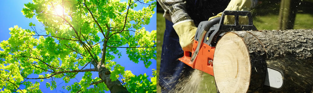 Tree Services Sewaren